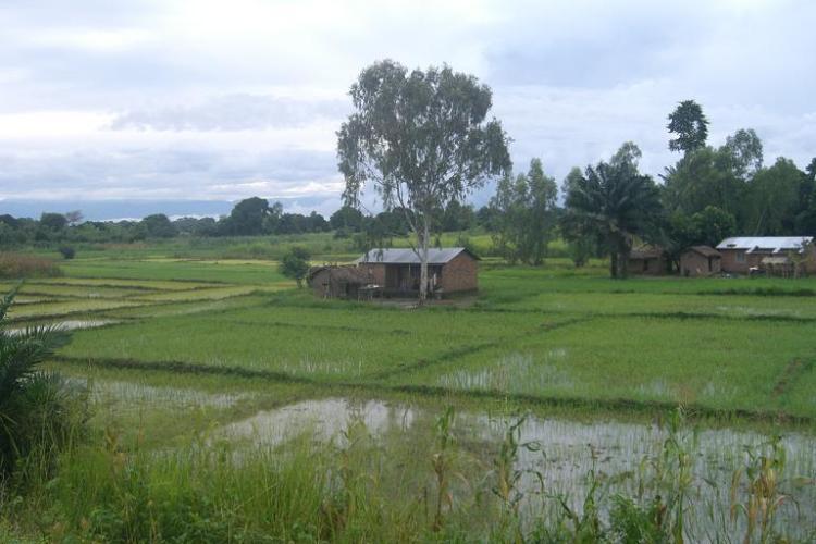 johns-rice-paddies