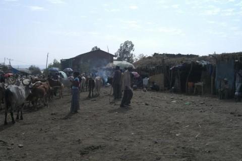 johns-ethiopian-morning1